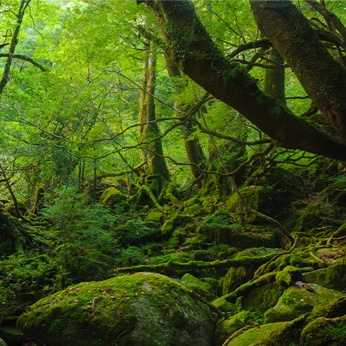 Kagoshima 2